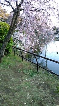 さくら千葉公園.JPG